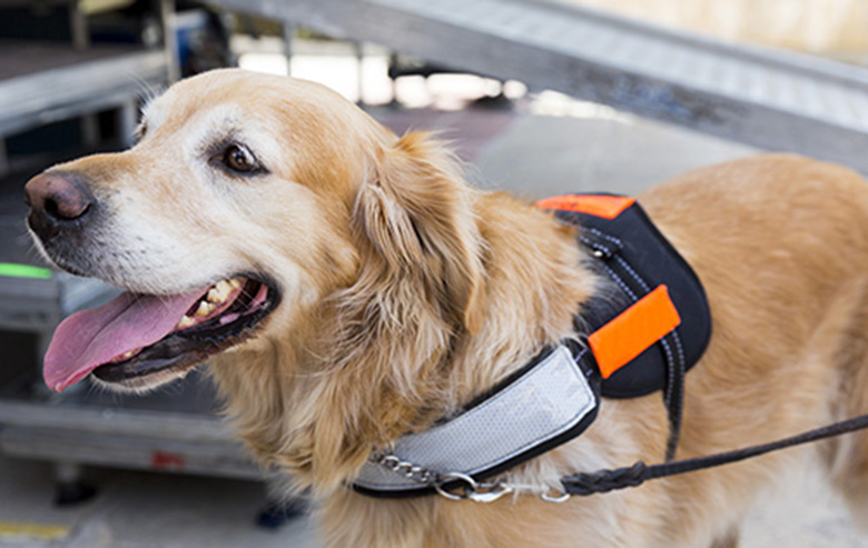 International Guide Dog Day 2017 – a guest blog from Guide Dogs